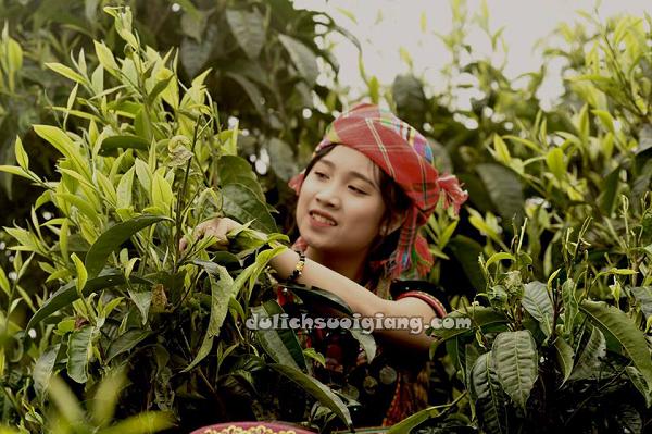 che-shan-tuyet-co-thu-giang-pang-yen-bai (24)