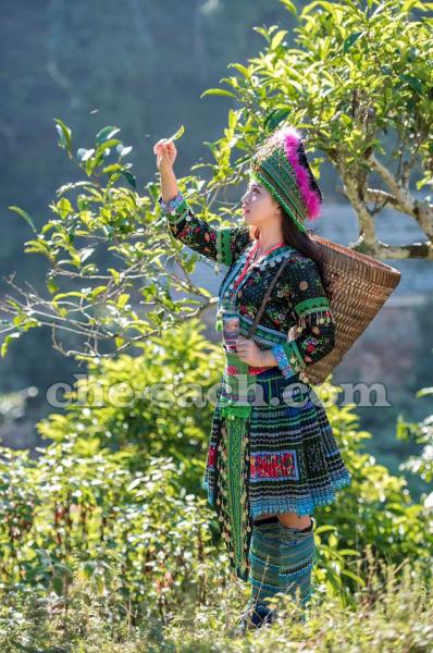 du-lich-suoi-giang-yen-bai (14)