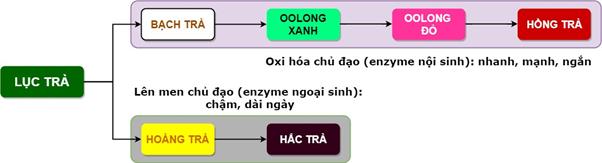 phan-loai-cac-dong-tra