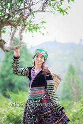 kham-pha-cay-tra-co-thu-suoi-giang (6)